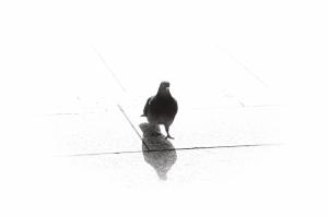 IMG_londonbird
